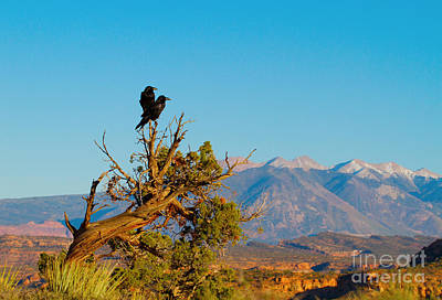 Photograph - Two Ravens In Arches National Park by Martha Marks