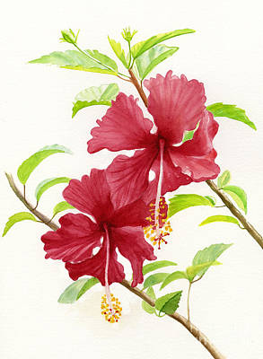 Hibiscus Wall Art - Painting - Two Red Hibiscus Flowers by Sharon Freeman