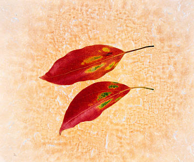 Two Red Leaves On Pink Background Art Print by Panoramic Images