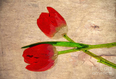 Photograph - Two Red Tulips by Charline Xia
