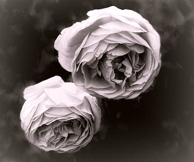 Photograph - Two Roses by Ann Powell