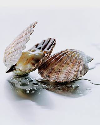 Cooking Photograph - Two Scallops by Romulo Yanes
