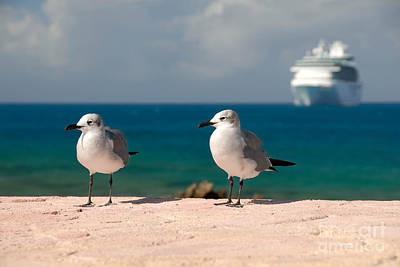 Two Seagulls And Cruise Ship Print by Amy Cicconi