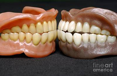 Photograph - Two Sets Of Dentures by Medicimage