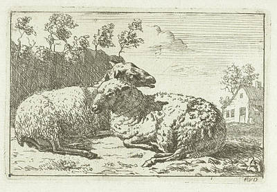 Fence Drawing - Two Sheep Lying Near Fence by M.van Dalen