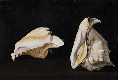 Jacques Painting - Two Shells by Filippo Napoletano