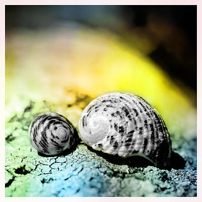 Nautilus Mixed Media - Two Shells On A Rock by Tommytechno Sweden