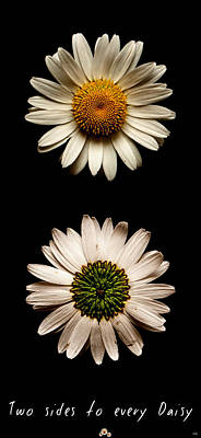Photograph - Two Sides To Every Daisy by Weston Westmoreland