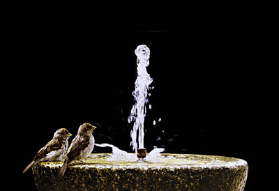 Painting - Two Sparrows by Alberto Ponno