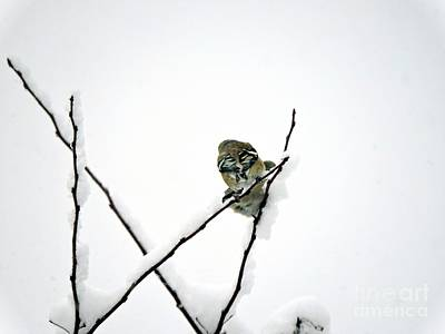 Photograph - Two Sparrows by Marcia Lee Jones