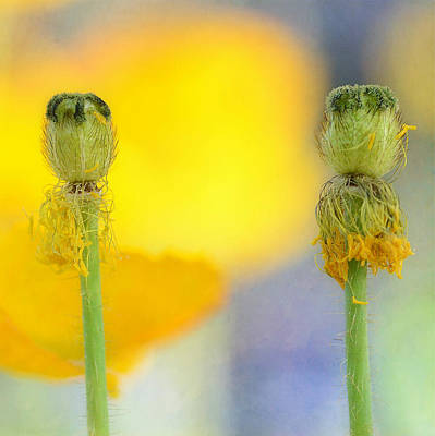 Photograph - Two Stems Squared by Fraida Gutovich
