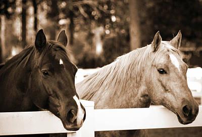 Two Sweet Horses Art Print