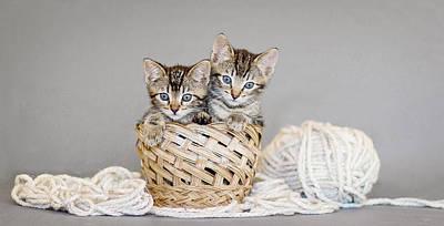 Gray Tabby Photograph - Two Tabby Kittens - Animal Rescue Portraits by Andrea Borden