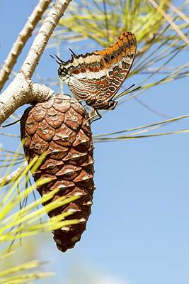 Two Tailed Photograph - Two-tailed Pasha (charaxes Jasius) by Photostock-israel