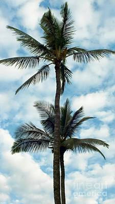 Photograph - Two Tall Palms by Peggy Hughes