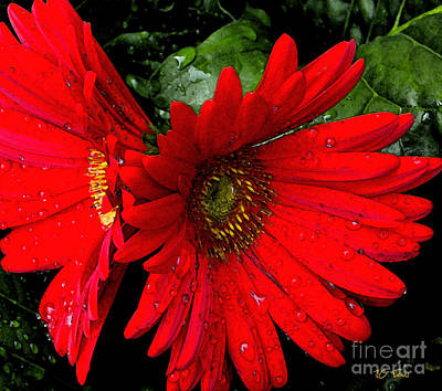 Photograph - Red Daisy by James C Thomas