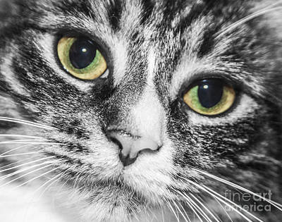 Photograph - Two Toned Cat Eyes by Jeannette Hunt