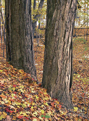 Photograph - Two Trees Autumn Leaves by Tom Brickhouse