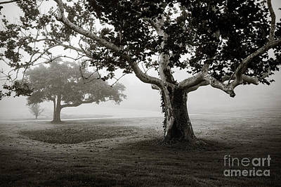 Photograph - Two Trees Colt State Park by David Gordon