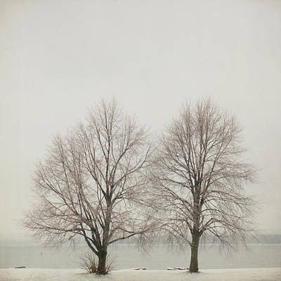 Ottawa Photograph - Two Trees by Francois Dion