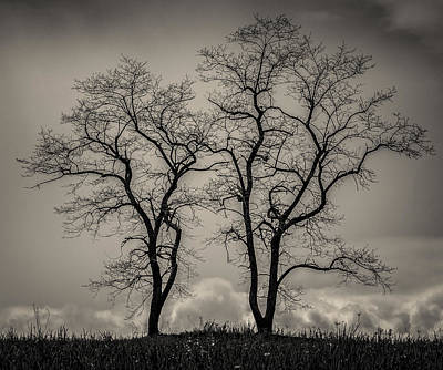 Photograph - Two Trees by Fred LeBlanc