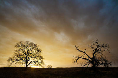 Photograph - Two Trees Greeting The Sun by Robert Woodward