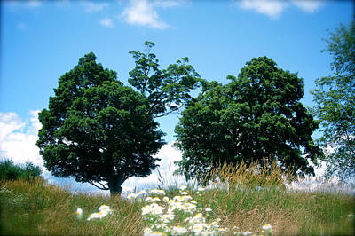 Wrongdoing Photograph - Two Trees Summer by David Lee Black