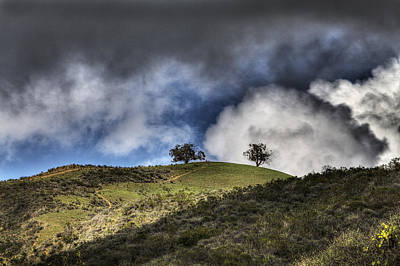 Photograph - Two Trees Ventura by Joe  Palermo