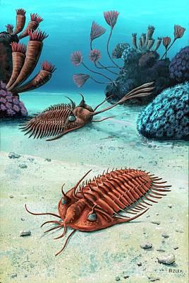 Trilobite Photograph - Two Trilobites Of The Devonian by Richard Bizley