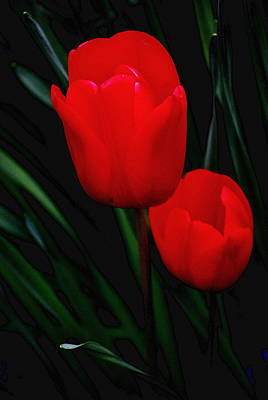 Photograph - Two Tulips In Red by Kathy Sampson