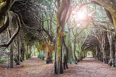 Photograph - Two Tunnels Taxus by Semmick Photo