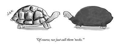 Turtle Drawing - Two Turtles by Jason Adam Katzenstein