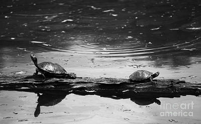 Photograph - Two Turtles On A Log by Jackie Farnsworth
