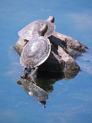 Photograph - Two Turtles On A Rock by Teresa Cox