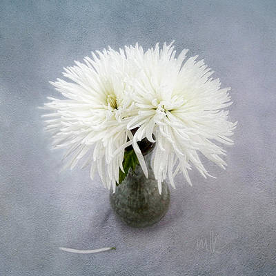 Photograph - Two White Mums In Green Vase Still Life by Louise Kumpf