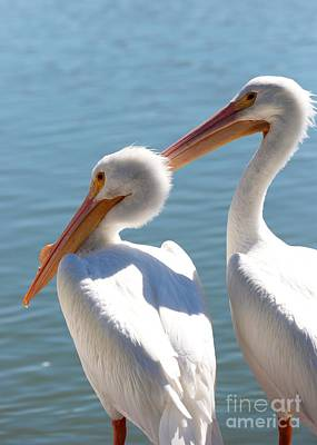 Photograph - Two White Pelicans On The Pier by Carol Groenen