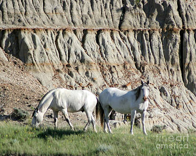 Photograph - Two Wild White Stallions by Sabrina L Ryan