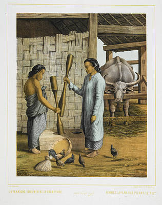 Oxen Photograph - Two Women Of Java by British Library