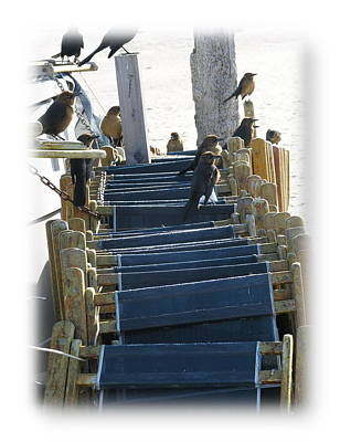 Photograph - Tybee Island Beach Guardians by Jacqueline M Lewis