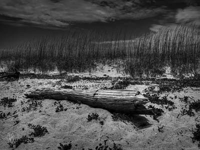 Photograph - Tybee Island Driftwood 001 Bw by Lance Vaughn