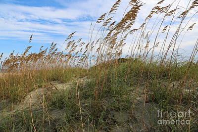 Photograph - Tybee Island Dune by Carol Groenen