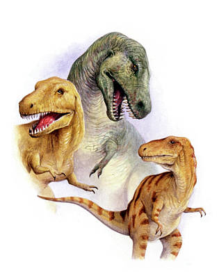 Paleozoology Photograph - Tyrannosaurs by Deagostini/uig