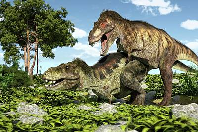 Tyrannosaurs Mating Art Print by Roger Harris