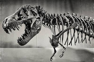 Photograph - Tyrannosaurus Rex by Alfio Finocchiaro