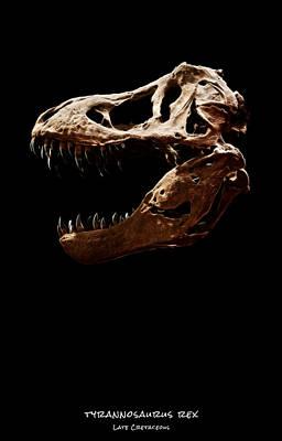 Photograph - Tyrannosaurus Rex Skull 2 by Weston Westmoreland