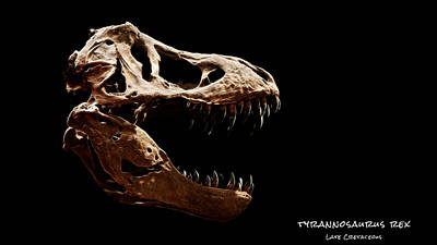Photograph - Tyrannosaurus Rex Skull 3 by Weston Westmoreland