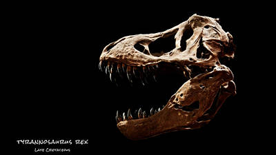 Photograph - Tyrannosaurus Rex Skull 4 by Weston Westmoreland
