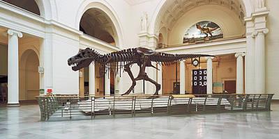 Tyrannosaurus Rex Skull In Field Art Print by Panoramic Images