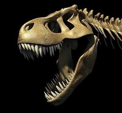 Tyrannosaurus Rex Skull Art Print