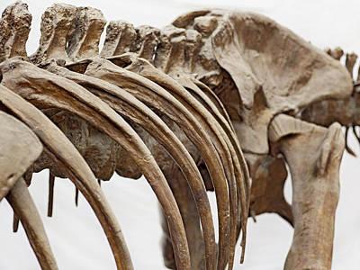 Single Object Photograph - Tyrannosaurus Skeleton by Dorling Kindersley/uig